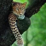 Ally Mchunga Profile Picture
